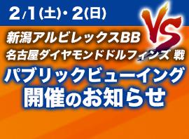 2/1(土)、2(日)新潟アルビレックスBB VS 名古屋ダイヤモンドドルフィンズ戦 パブリックビューイング開催のお知らせ